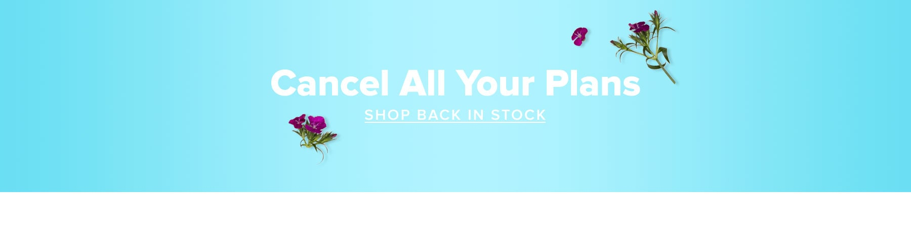 Cancel All Your Plans. Shop Back In Stock.
