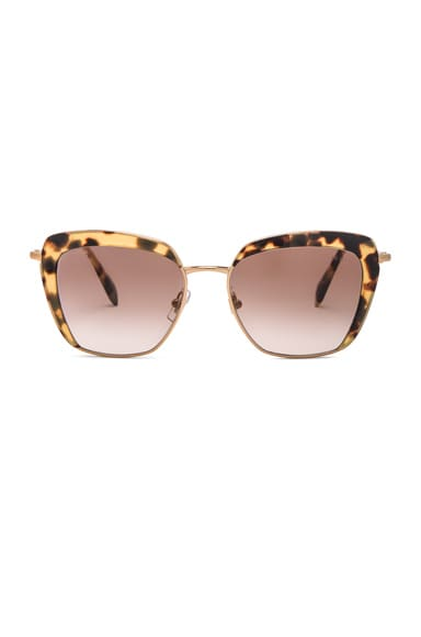 Miu Miu Square Sunglasses in Light Havana
