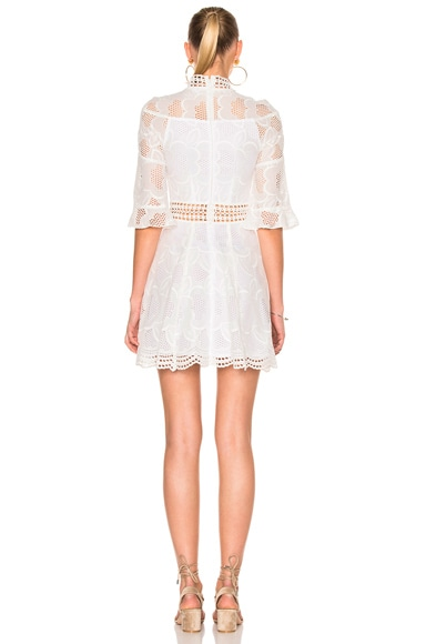 Pollen Lace Paneled Dress