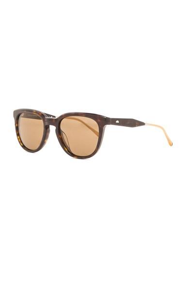 Polarized Beech Sunglasses