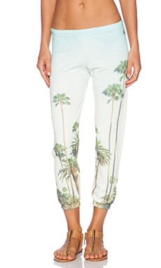 All Things Fabulous Sweatpant in Palm Trees