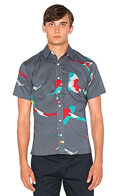 Ambsn Parrot Button Down in Coal