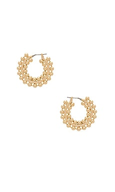 Nicoletta Hoop Earrings in Gold