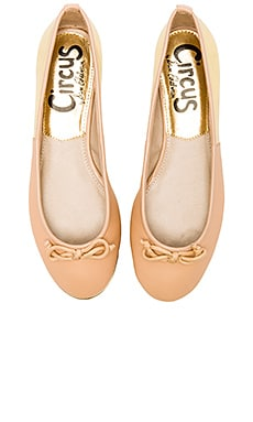 Circus by Sam Edelman Banks Flat in Latte & Gold Flash