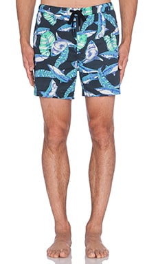 Insight Jaws Beach Short in Jaws Black