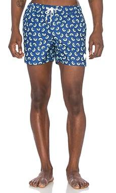 Kiwi Swim