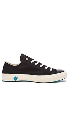 Shoes Like Pottery Low Top Canvas in Black