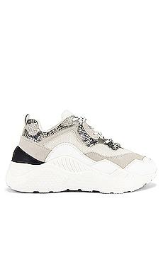 Antonia Sneaker Steve Madden $90 NEW ARRIVAL