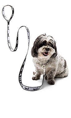 Stussy Dog Collar-Leash Set in Black