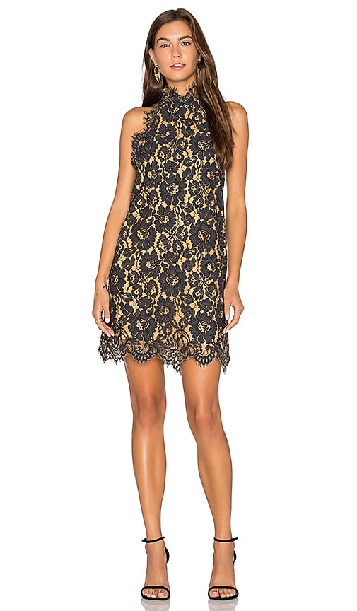 ANIMALE Lace Shift Dress in Black
