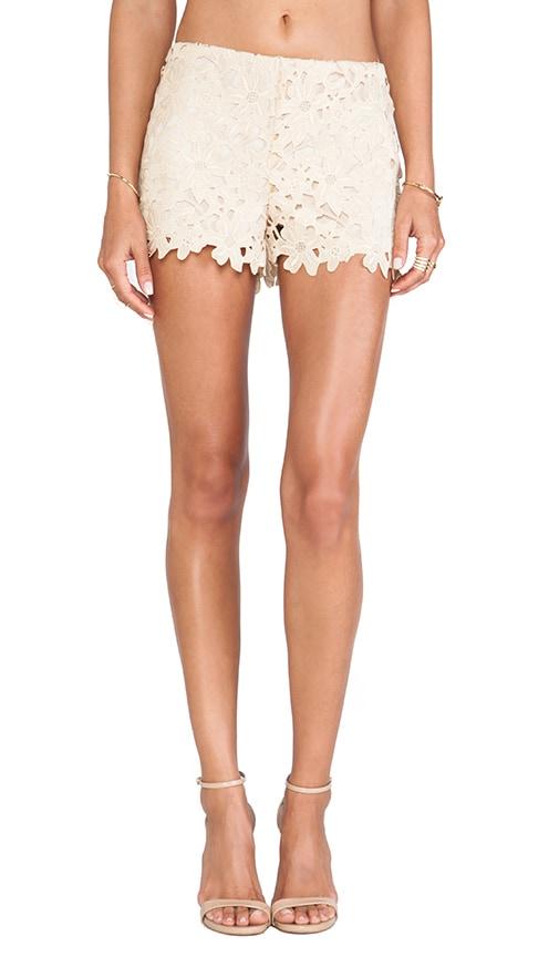 Trellis Lace Shorts