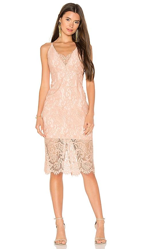 Bardot Pencil Lace Midi Dress in Rose