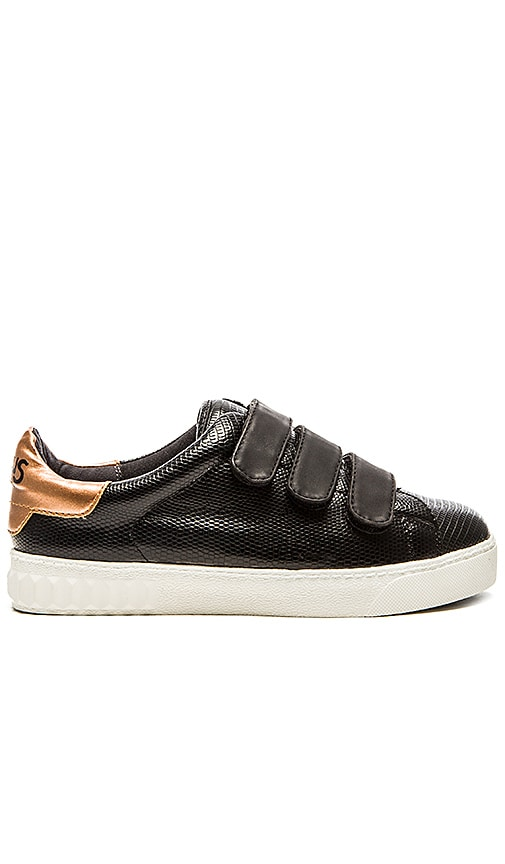 Circus by Sam Edelman Chase Sneaker in Black
