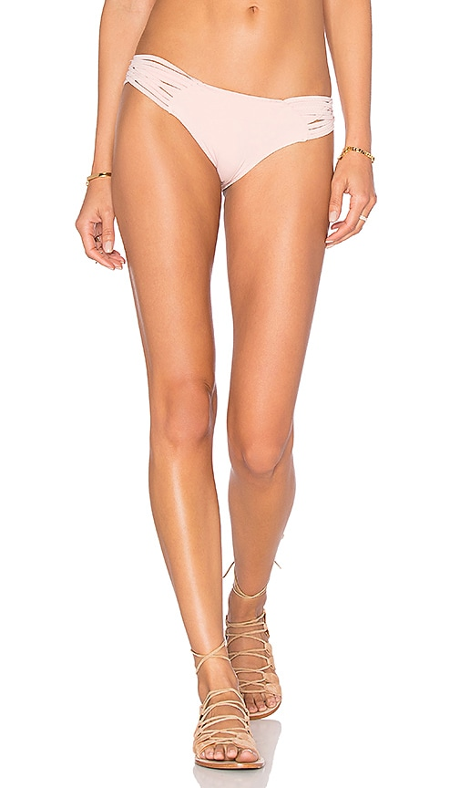 Bouvier Bikini Bottom