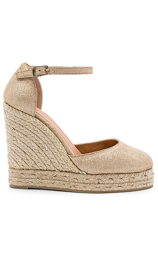 Carissa Wedge