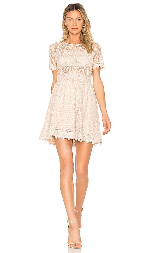 J.O.A. Lace Fit & Flare Dress in Blush