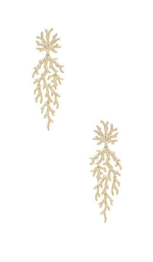 Kendra Scott Aviana Earrings in Metallic Gold