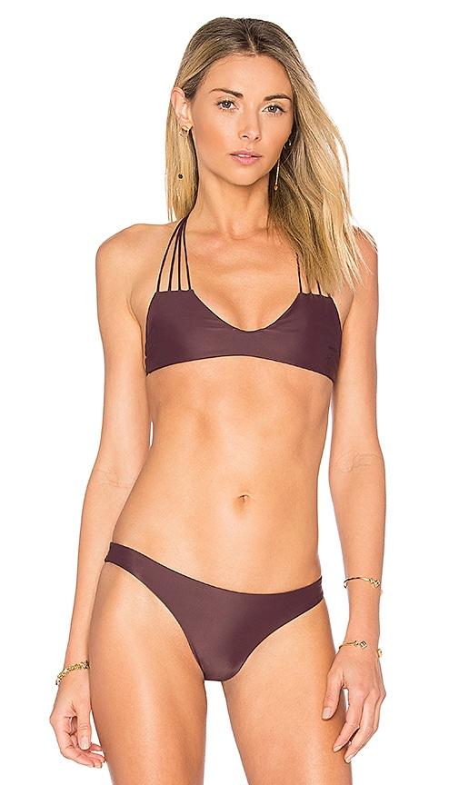 MIKOH Banyans Bikini Top in Purple