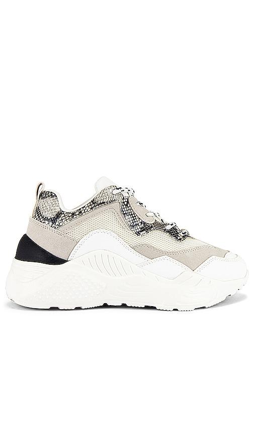 Steve Madden Antonia Sneaker in White
