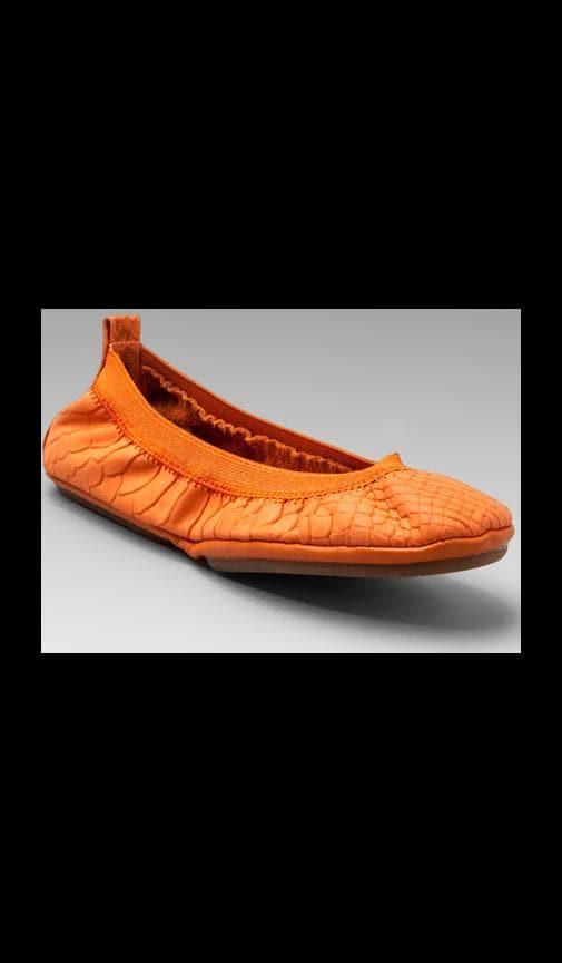 Waxy Crocodile Flat