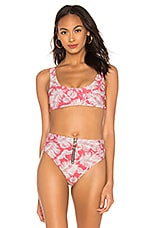 AMUSE SOCIETY Daniela Bralette Bikini Top in Mahogany