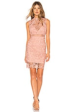 Bardot Lace Dress in Bloom