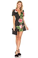 LPA Dress 189 in Black Rose