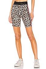 Pam & Gela Biker Short in Leopard