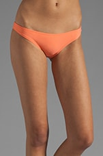 Maluku Bottom in Coral