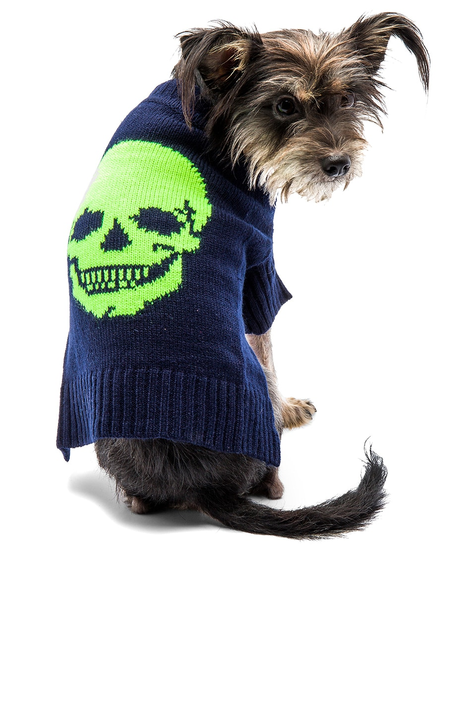 360 Sweater Skull Dog Sweater in Navy & Neon Yellow