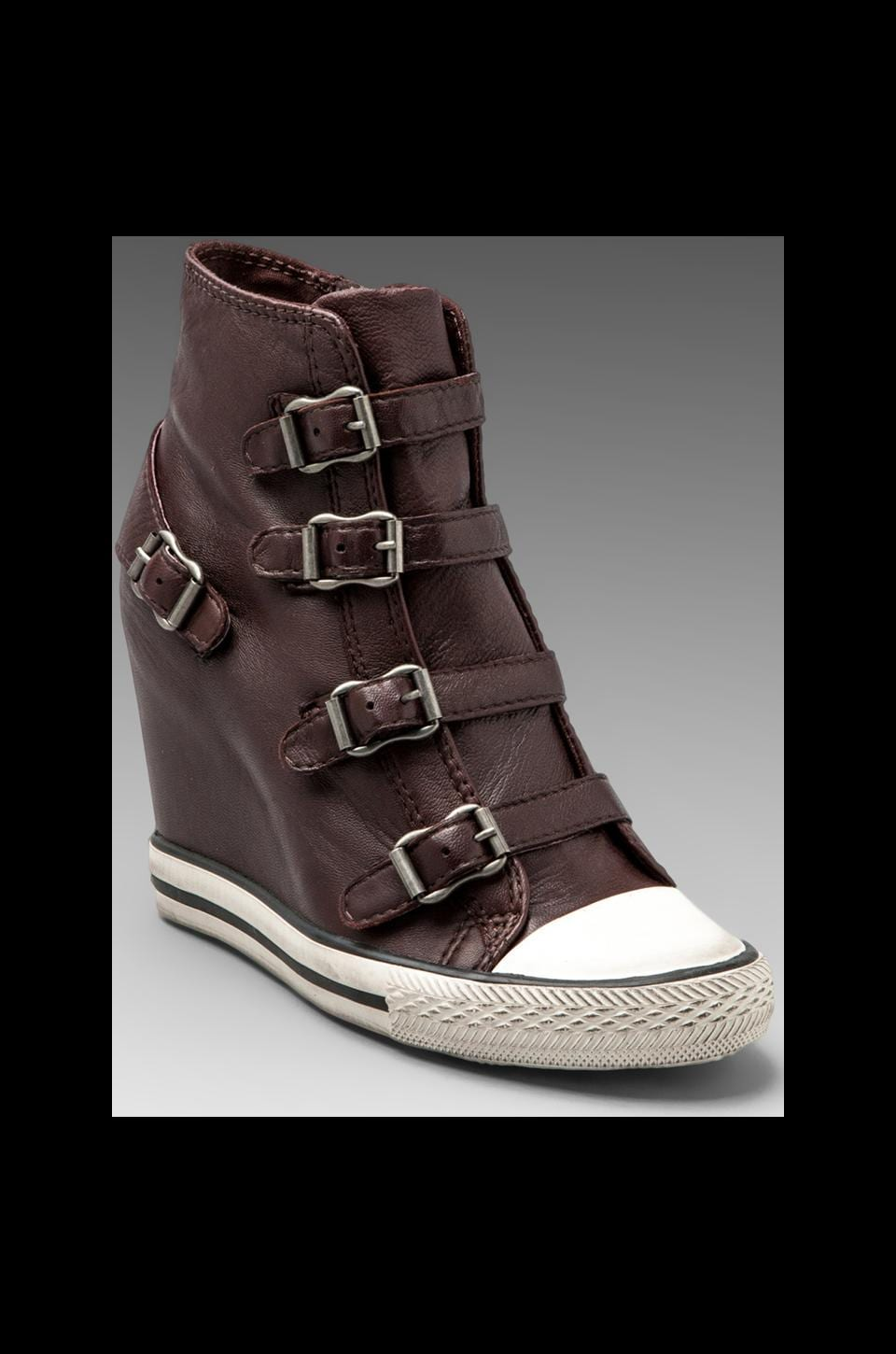Ash United Wedge Buckle Sneaker in Prune