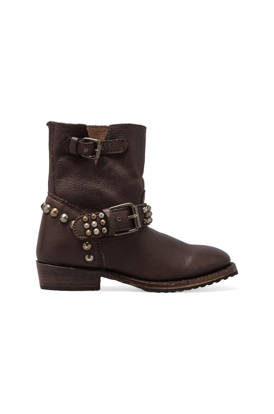Ash Vicious Studded Bootie in Moro
