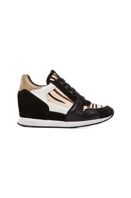 Ash Dean Sneaker in Black & Creme