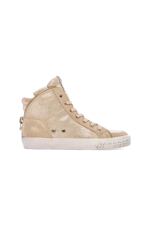 Ash Shake Sneaker in Platine