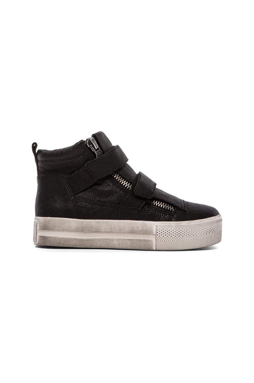 Ash Jump Sneaker in Black & Black