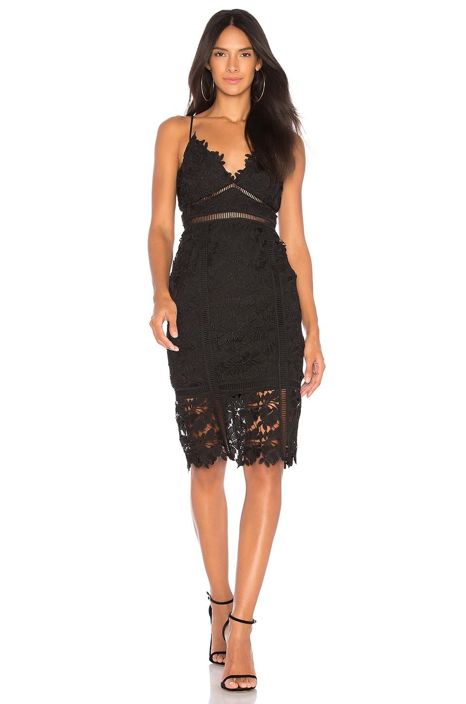 Bardot Botanica Lace Dress in Black