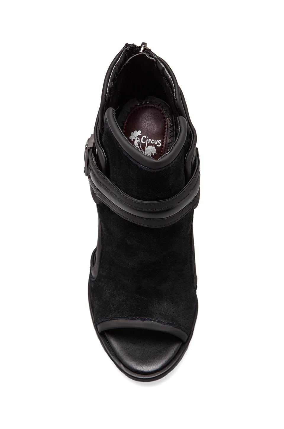 Circus by Sam Edelman Skye Bootie in Black