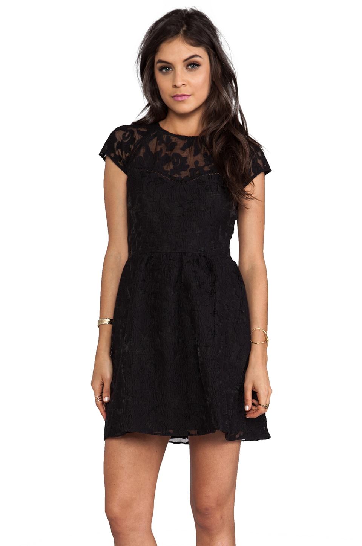 Dolce Vita Winsor Organza Lace Dress in Black