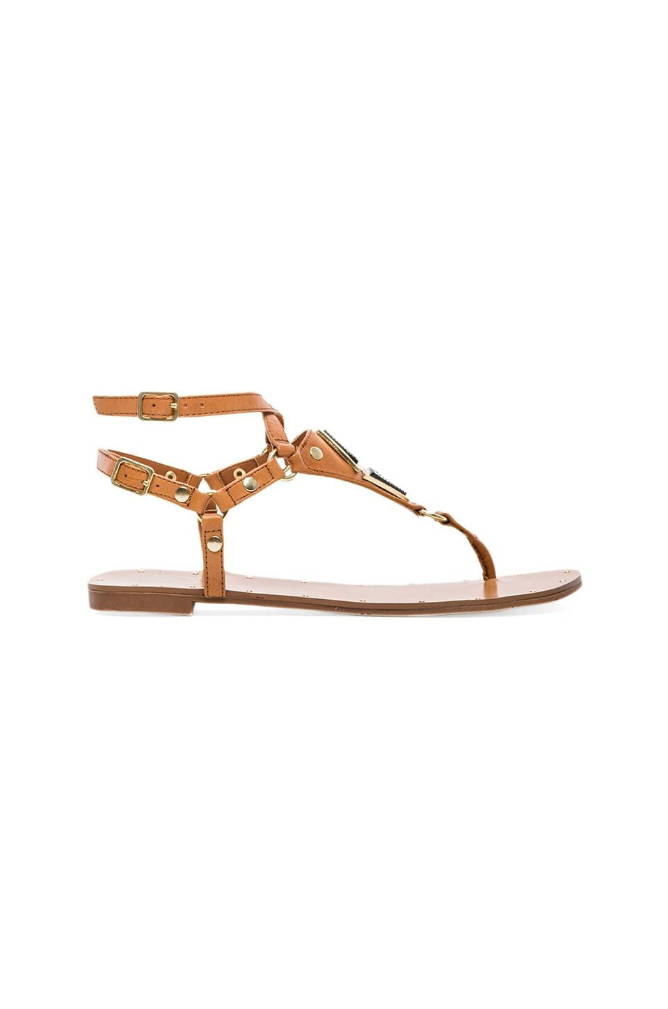Dolce Vita Darva Sandal in Honey