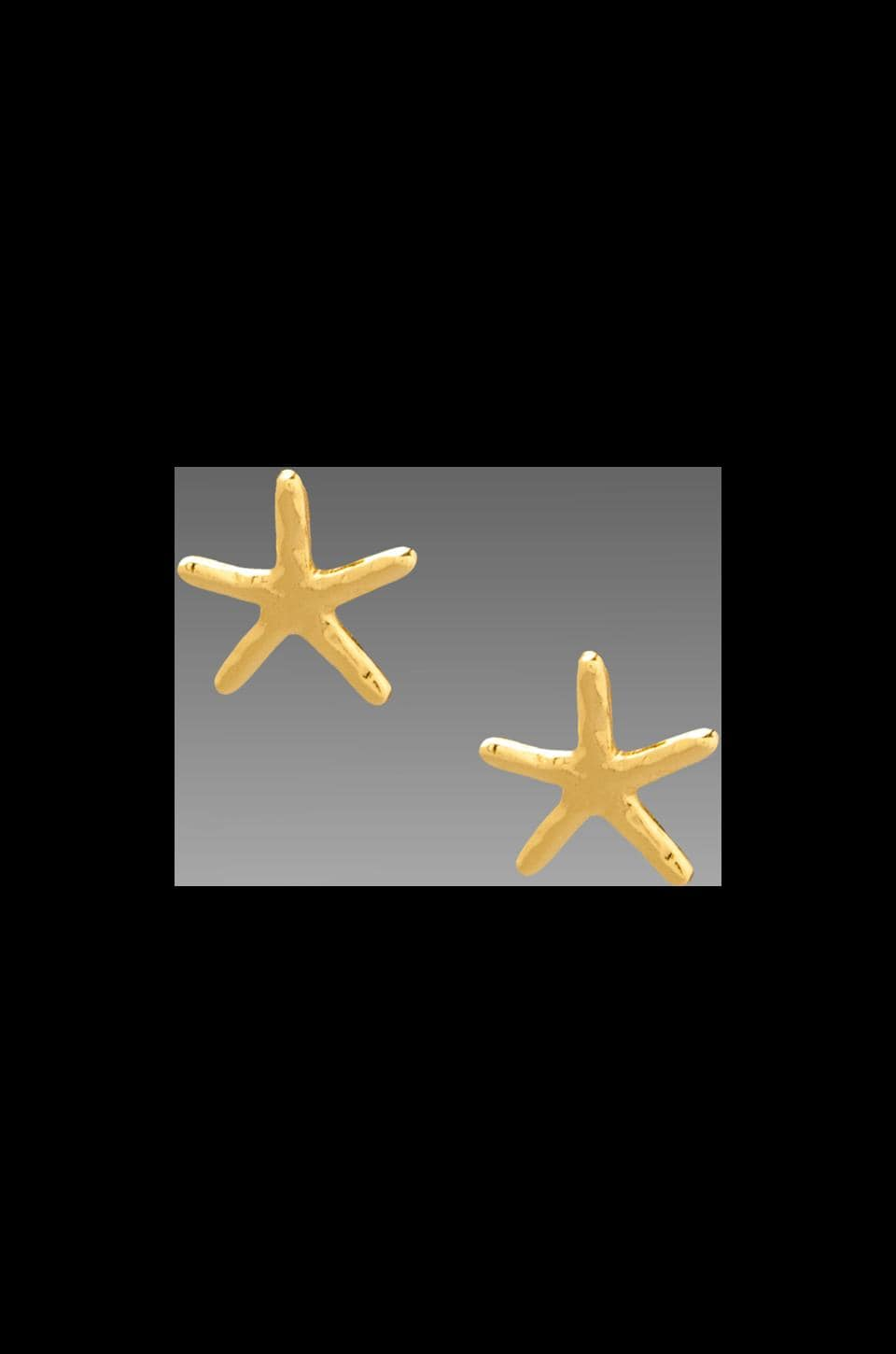 gorjana Starfish Stud Earrings in Gold