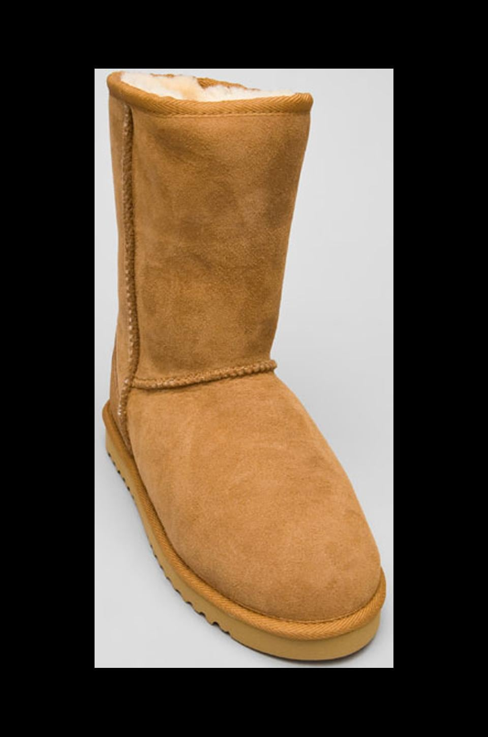 Australia Luxe Collective Classic Cosy Short Boot in Chestnut