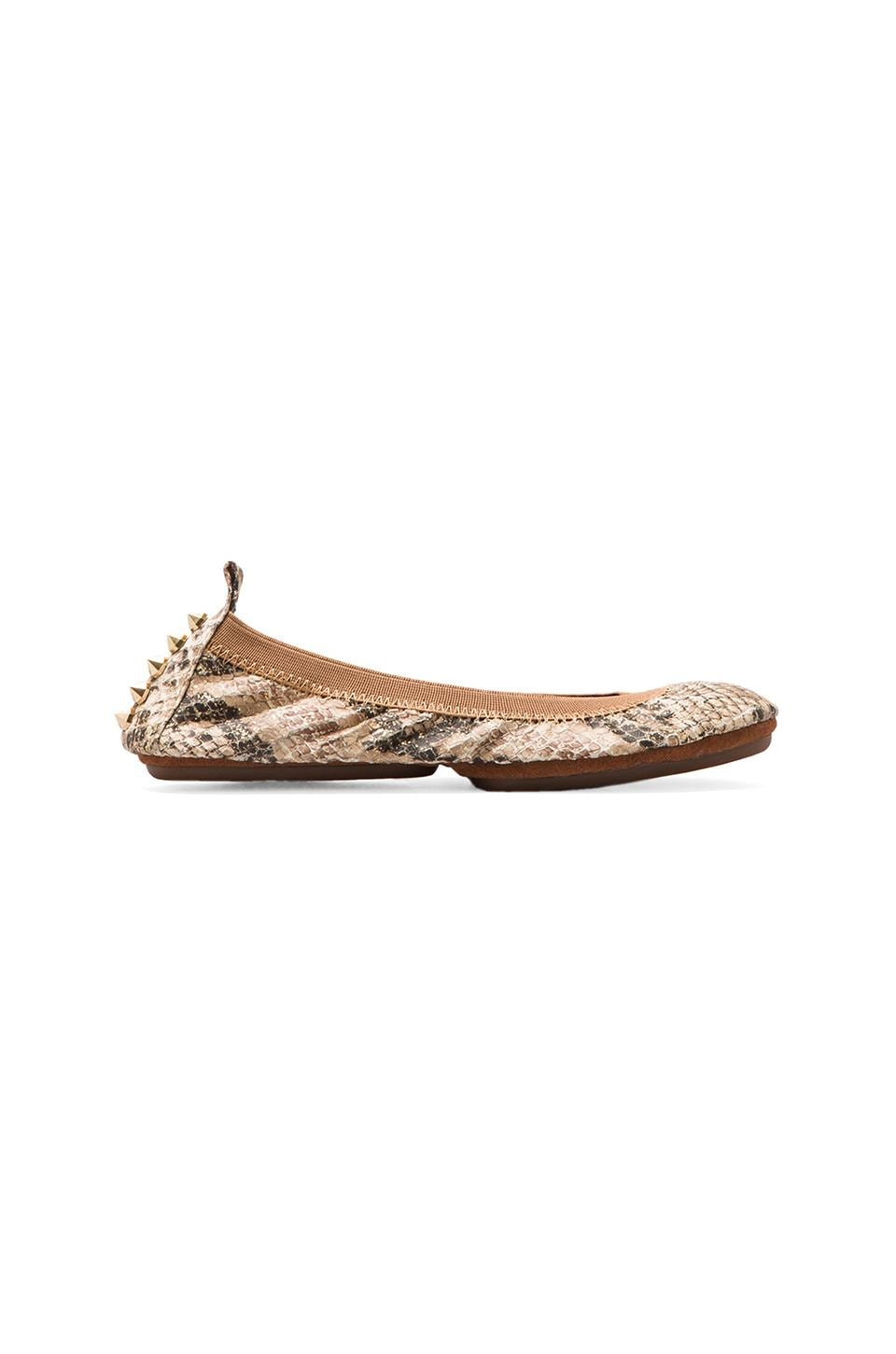 Yosi Samra Studded Back Ballet Flat in Gold Serpent
